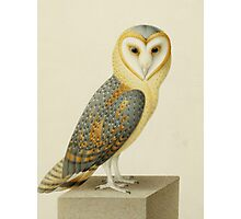 Joseph Nicolas Robert-Fleury - A Barn Owl. Bird painting: cute fowl, fly, wings, lucky, pets, wild life, animal, owls, little small, owl, nature Photographic Print