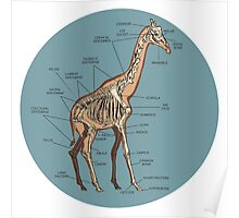 Anatomy of a Giraffe- Skeleton Poster