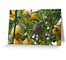 Lemon Sparrow Greeting Card