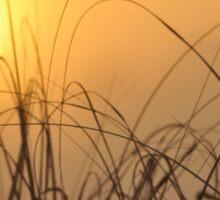 Everglades Sunrise, As Is Sticker