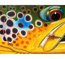 Brown Trout on Parachute Adams Photographic Print
