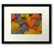 Ducks Amok Framed Print