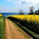 Walking towards the spring sea by jchanders