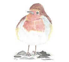 English Robin Watercolor  Photographic Print