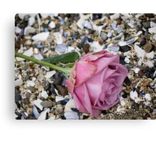 Seashell Rose Canvas Print