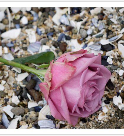 Seashell Rose Sticker