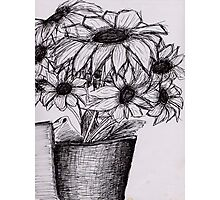 Sunflower Sketch Photographic Print