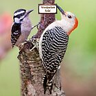 Woodpeckers Rule! by Bonnie T.  Barry