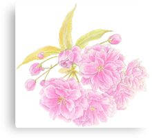 Spring Prunus pink double tree blossom Canvas Print