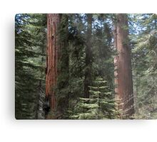 Forest Giants Metal Print