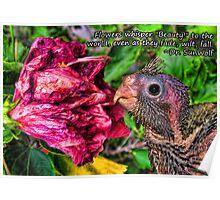 Hibiscus at Wilt Poster