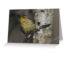 Palm Warbler 1 Greeting Card