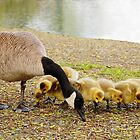 Brunch with Mommy by Tracy Friesen