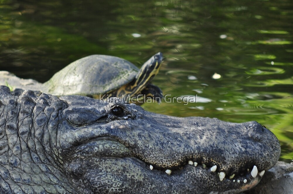 Alligator and Turtle, As Is by Kim McClain Gregal