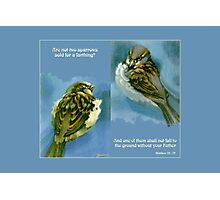 Two Sparrows Photographic Print