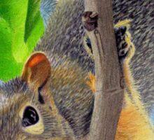 Beautiful Squirrel in Tree Sticker