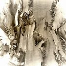 Peeling Bark Abstract by kenspics