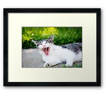 Yawning Cat Framed Print