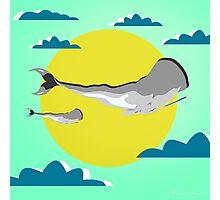 whale life  Photographic Print
