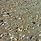 A Shells Life by Dana Yoachum