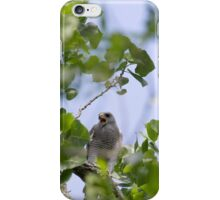 Gray Hawk (Buteo plagiatus) iPhone Case/Skin