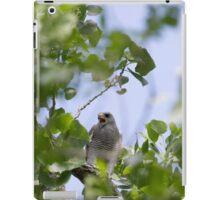 Gray Hawk (Buteo plagiatus) iPad Case/Skin