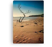 catherine bay beach tree nsw Canvas Print
