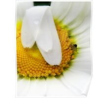 Daisies are the best Poster