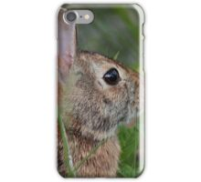 Eastern cottontail iPhone Case/Skin