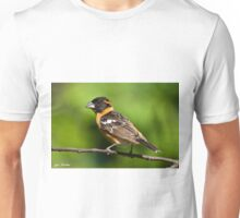 Male Black Headed Grosbeak in a Tree Unisex T-Shirt