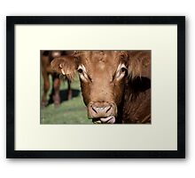 Whiskey the Bull Framed Print