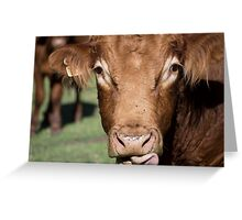 Whiskey the Bull Greeting Card