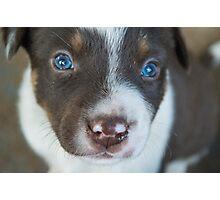 Puppy Dog Eyes Photographic Print