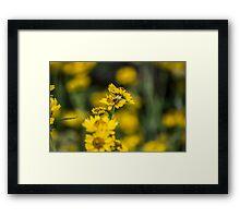 Mr Bee Framed Print