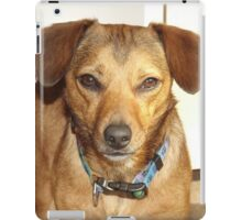 Dog Ipad case iPad Case/Skin