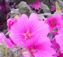 Pretty Pink Flowers Sticker