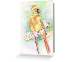 Cardinal for all seasons Greeting Card