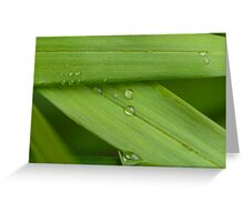 Water droplets on a leaf Greeting Card
