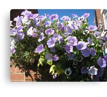 Mauve Is Pretty! Hanging Basket Canvas Print