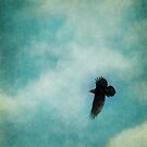 Cloudy spring sky with a soaring raven  by Priska Wettstein