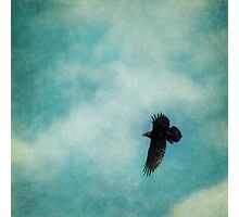 Cloudy spring sky with a soaring raven  Photographic Print