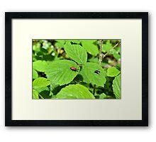 Fly Vs Bug Framed Print