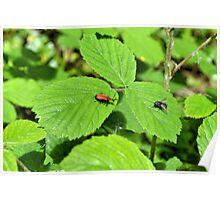 Fly Vs Bug Poster
