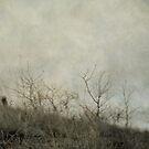 Dream 2 by Priska Wettstein
