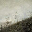 Dream 3 by Priska Wettstein