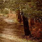 A Path Through Woods .. by Mike  Waldron