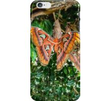 Butterfly - iPhone 4/4S/5/5S iPhone Case/Skin