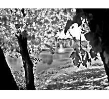 Sunlit Tree and Fountain, Franklin NJ USA Photographic Print
