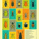 COMMON BEETLES OF NORTH AMERICA by JazzberryBlue