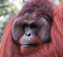 Mr.Orangutan by Charman69